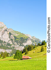 montagnes., hills., capturé, piste, vert, lac, kandersteg, suisse, oeschinensee, paysage, suisse, vertical, été, mener, rochers, prés, rocheux, season., alpin, alpes, photo