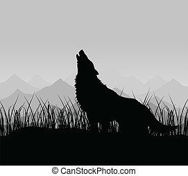 montagnes, loup