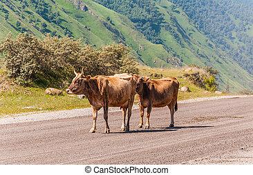 montagnes, marche, fond, vaches, long, route