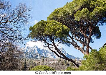 montagnes, paysage, arbres