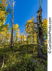 montagnes, tremble, lasal, arbres, automne
