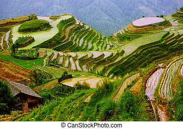 monture, yunnan, riz, porcelaine, terrasses