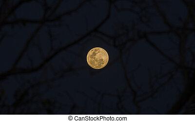 moon., entiers, ciel, nuit