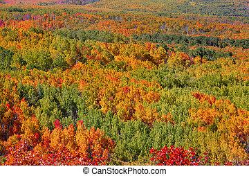 moquette, arbres, automne