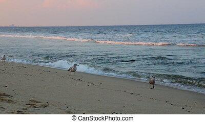 mouche, bleu, cormoran, sur, ciel, océan, fond, surface.