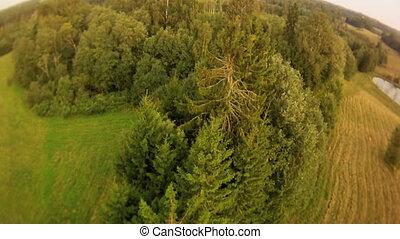 mouche, champ, sur, forêt