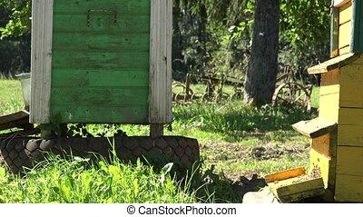 mouche, coloré, essaim, apiculteur, farm., ruche, insecte, abeilles, 4k
