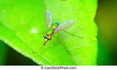 mouche, manger, long, insecte, closeup, jambes, autre, avide