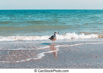 mouette, contre, day., appareil photo, ensoleillé, portrait, marine, regarder, rivage, beau