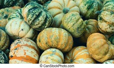 moule, coup, gland, célébration, f1, cucurbita, harvest:, pepo, tas, citrouille