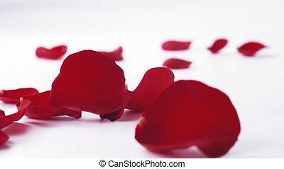 mouvement, pétales rose, fond, lent, blanc rouge, tomber