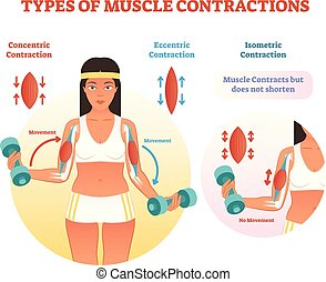 movement., contractions, poids, section, croix, types, muscle, bras, levage