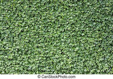 mur, couvert, brique, vert, leaves.