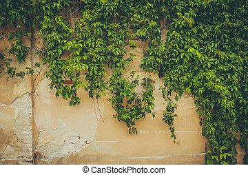 mur, couvert, feuilles, vert