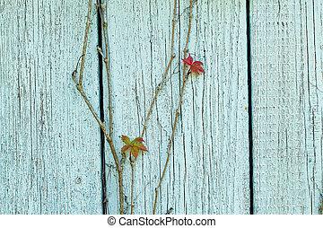 mur, ivy., bleu, bouclé, texture bois