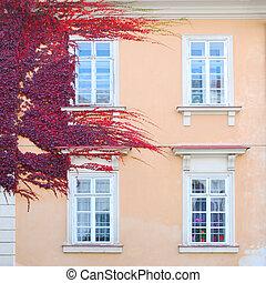mur, maison, feuilles, historique, couvert, lierre, rouges