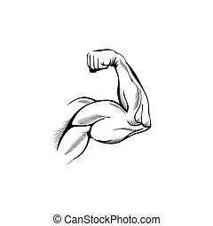 muscles, bras