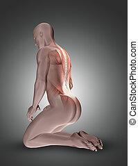 muscles, figure, dos, mis valeur, mâle, agenouillement, 3d