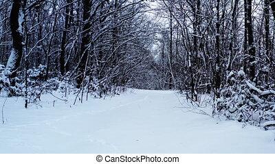mystérieux, chariot, coup, par, glade., hiver, neigeux, -, clairière, forêt