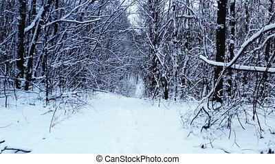 mystérieux, forêt, path., coup, par, dehors, hiver, neigeux, route, chariot