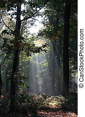 mystérieux, forêt