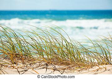 négligence, dune, herbe verte, plage, sablonneux