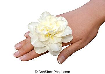 narcisse, blanc, femme, isolé, main