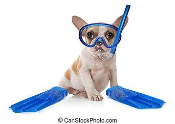 natation, chiot, engrenage, snorkeling, chien