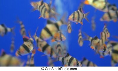 natation, fish, beaucoup, aquarium, bleu, air, bulles, eau, fishbowl