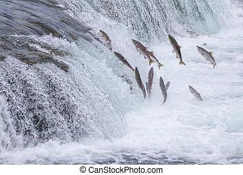 national, saumon, haut, ruisseaux, chutes, parc, sauter, alaska, katmai