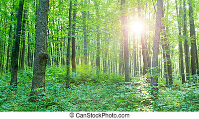nature, arbres., arrière-plans, lumière soleil, bois, forêt verte