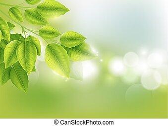 naturel, feuilles, ensoleillé, bokeh, arrière-plan vert, frais, résumé
