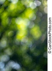 naturel, fond, printemps, parc, bokeh., brouillé, feuillage vert