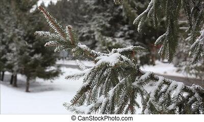 neige, 1, impeccable