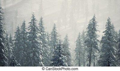 neige a couvert, cône, flanc montagne, arbres hiver