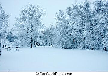 neige, arbres, chargé