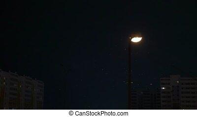 neige, illumine, tomber, lanterne, nuit