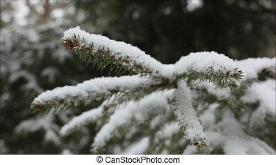neige, impeccable, 2