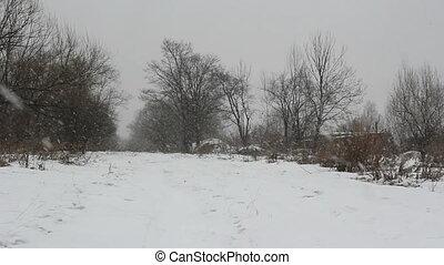 neige, jour, hiver, woods..