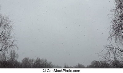 neige, premier