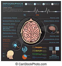 nerveux, système médical, cerveau, infographic, infochart