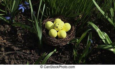 nid, grass., paques, vert, jaune, concept, oeufs