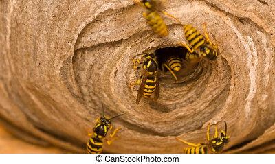 nid, wasp's