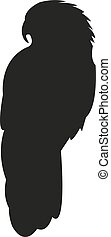 noir, blanc, silhouette, fond, perroquet