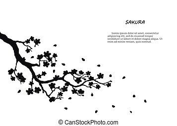noir, blanc, silhouette, sakura, fond