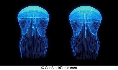 noir, boucle, bleu, biens, méduse