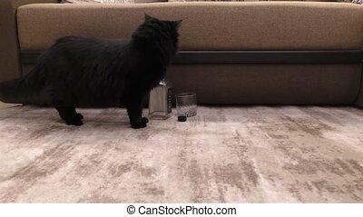noir, cat., maison