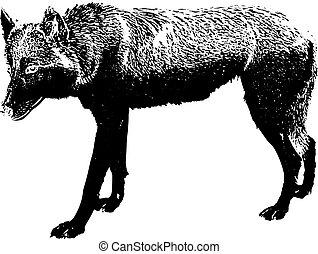 noir, fond blanc, silhouette, loup