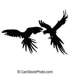 noir, silhouette, deux, perroquet