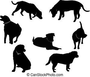 noir, silhouettes.., labrador